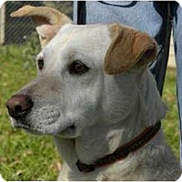 Adopt A Pet :: MEADOW - Hagerstown, MD