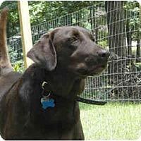 Adopt A Pet :: Brandy - Cumming, GA