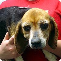 Adopt A Pet :: Gertie - baltimore, MD