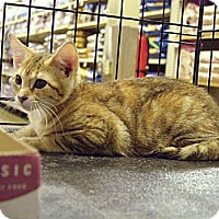 Adopt A Pet :: Suzette - Pittstown, NJ