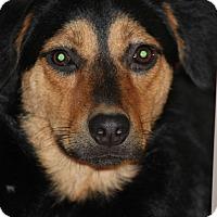 Adopt A Pet :: Aria - Las Vegas, NV