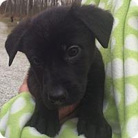 Adopt A Pet :: Spirit - Salem, MA