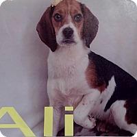 Adopt A Pet :: Ali - Delaware, OH