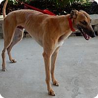Adopt A Pet :: Tanner - Florence, KY