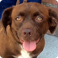 Adopt A Pet :: PRUDENCE (video) - Los Angeles, CA