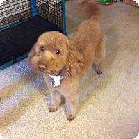 Adopt A Pet :: Maggie - Las Vegas, NV