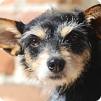 Adopt A Pet :: Trigger - lovely companion - Norwalk, CT