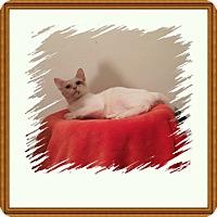 Adopt A Pet :: Dharma - Hampton, VA