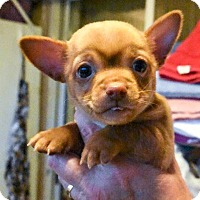 Adopt A Pet :: ALEXANDER - Hurricane, UT