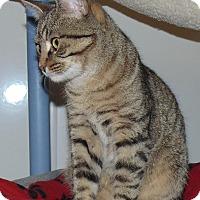 Adopt A Pet :: Max 2 - Jackson, MO