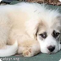 Adopt A Pet :: Lucia - new pup! - Beacon, NY