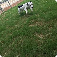 Adopt A Pet :: Emily - Gadsden, AL