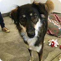 Adopt A Pet :: 'GYPSY' - Agoura Hills, CA