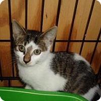 Adopt A Pet :: Tamra - Breinigsville, PA