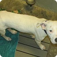 Adopt A Pet :: BRANDI - Aiken, SC