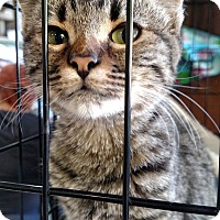 Adopt A Pet :: Honolula - Yuba City, CA