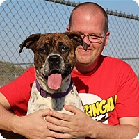 Adopt A Pet :: Sassy - Elyria, OH