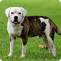 Adopt A Pet :: Mojo - Newport, KY