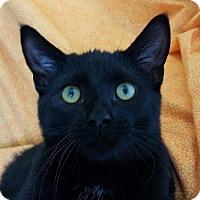 Adopt A Pet :: lago - Colfax, IA