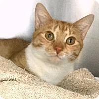 Adopt A Pet :: Claushette - Philadelphia, PA