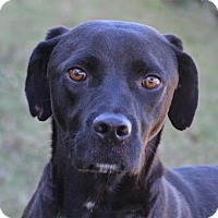 Adopt A Pet :: Ben - Englewood, FL