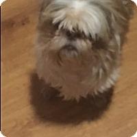 Adopt A Pet :: Quinn the Eskimo - Glendale, AZ