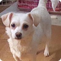 Adopt A Pet :: Carla - Cary, NC
