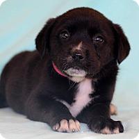 Adopt A Pet :: Ushi - Waldorf, MD