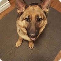 Adopt A Pet :: LILLY - Winnipeg, MB