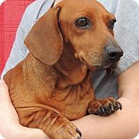 Adopt A Pet :: Agnes - Joplin, MO