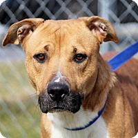Adopt A Pet :: Roxann - Liberty Center, OH