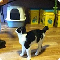 Adopt A Pet :: Manny - Monroe, GA