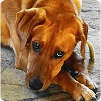Adopt A Pet :: MAGGIE MAE - Parsons, TN