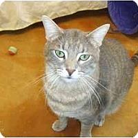 Adopt A Pet :: Brutus - Lake Charles, LA