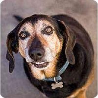 Adopt A Pet :: CowBoy - Portland, OR