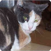 Adopt A Pet :: Patches - Fort Lauderdale, FL
