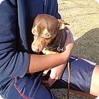Adopt A Pet :: Jayda - Crawfordville, FL