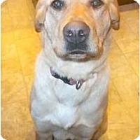 Adopt A Pet :: Torri - Douglas, MA