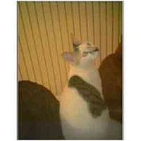 Adopt A Pet :: Kippa - Owasso, OK