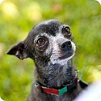 Adopt A Pet :: Pedro - Metairie, LA