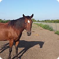 Adopt A Pet :: Tinkerbell - Farmersville, TX