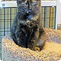 Adopt A Pet :: Ruby - Victor, NY