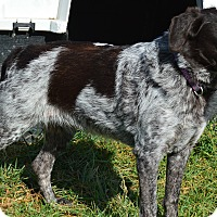 Adopt A Pet :: Jewels - Prole, IA