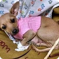 Adopt A Pet :: Mindy - Mesa, AZ
