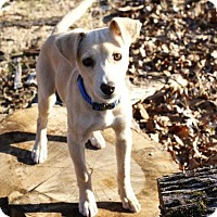 Adopt A Pet :: French Fry - Pocahontas, AR