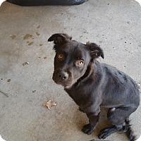 Adopt A Pet :: Peanut - Bedford, TX