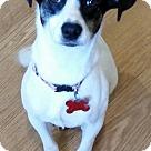 Adopt A Pet :: Carmen ADOPTION PENDING!