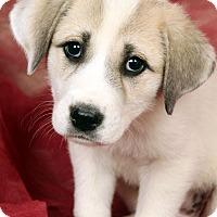 Adopt A Pet :: Tammy Pry - St. Louis, MO