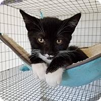Adopt A Pet :: stocaí - Umatilla, FL