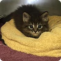 Adopt A Pet :: Matilda - Pinckney, MI